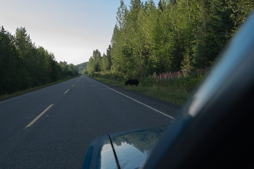 First encounter with a black bear