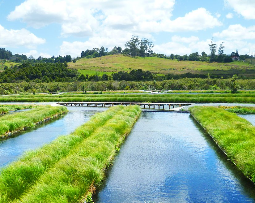 That's what the islands will look like outside in the pond (Image from http://waterclean.co.nz)