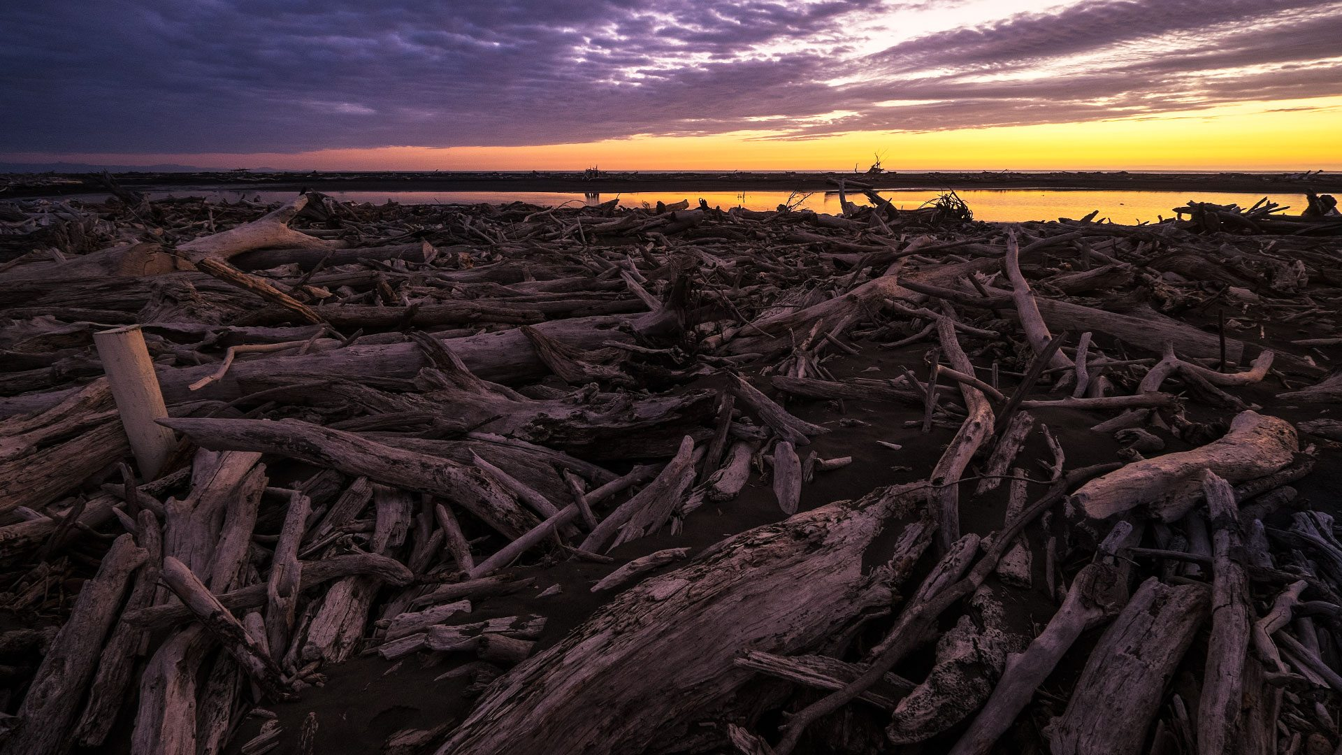Driftwood, Koitiata Beach, New Zealand